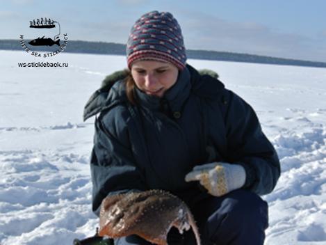 Елена Рыбкина (Шатских) Белое море проект о трехиглой колюшке